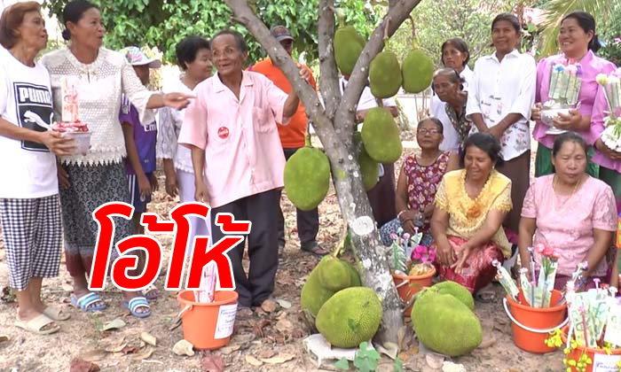 ต้นขนุนออกลูกโคนต้นถึง 11 ลูก ชาวบ้านแห่ขอหวยเชื่อจะได้โชครับสงกรานต์