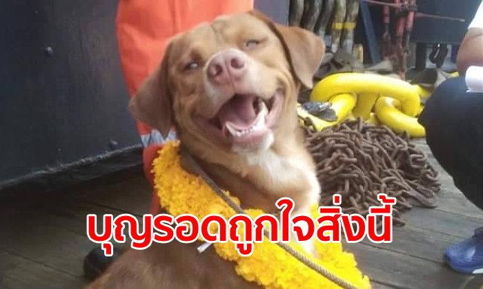 """อัปเดตชีวิต """"บุญรอด"""" หมาอ่าวไทยได้กลับขึ้นฝั่งแล้ว ส่งรักษาตัวก่อนไปอยู่บ้านใหม่"""