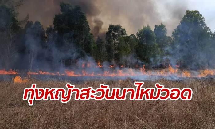 """ไฟไหม้ """"ทุ่งหญ้าสะวันนา"""" เกาะพระทอง อันซีนไทยแลนด์ วอดนับพันไร่"""