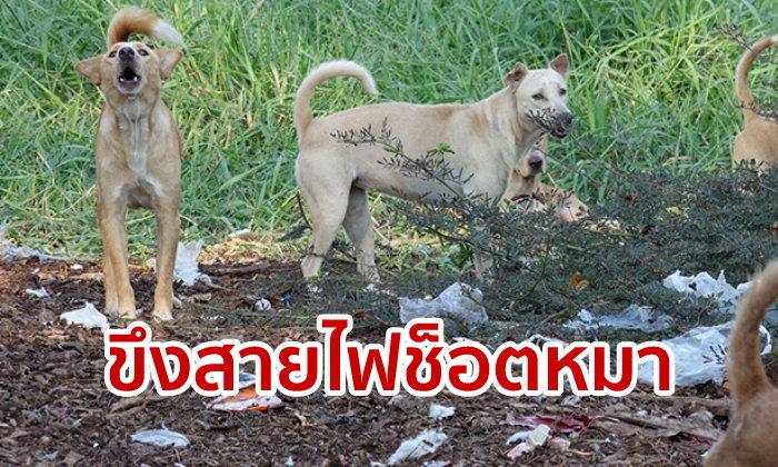 เจ้าของหมาสะอื้น! เพื่อนบ้านปทุมธานีขึงสายไฟช็อตสุนัขตาย ไม่นึกทำกันถึงขนาดนี้