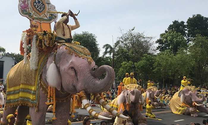 ช้างคชลักษณ์ 11 เชือก เดินถวายพระพรชัยมงคลในหลวง รัชกาลที่ 10