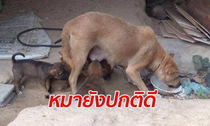 ปศุสัตว์เพิ่งเคยเจอ หมาแม่ลูกอ่อนกัดสาววัย 24 ถึงขั้นต้องตัดขาทิ้ง ตรวจไม่พบอาการบ้า