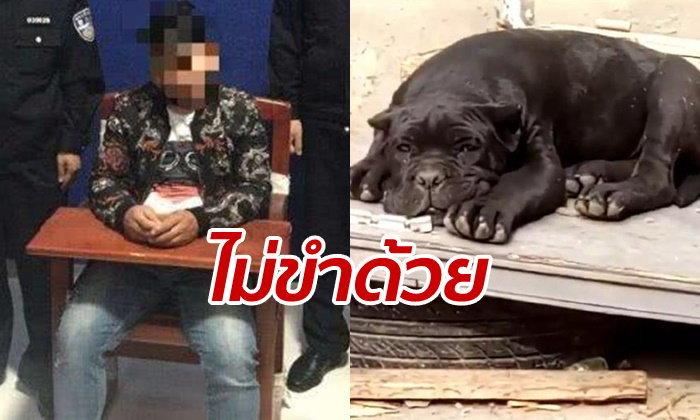 """ชายจีนนอนคุก 10 วัน หลังตั้งชื่อสุนัขเพาะขายว่า """"เทศกิจ"""""""