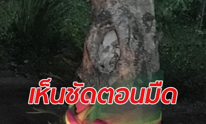 ตะลึง! หน้าผู้หญิงโผล่ต้นมะขาม คอหวยแห่ส่องเลขเด็ดคึกคัก