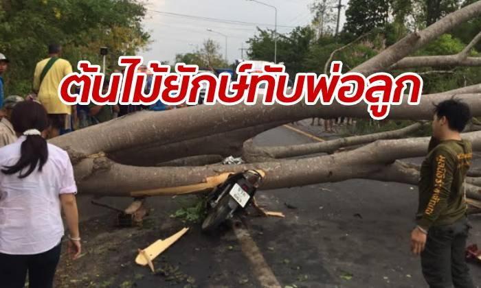 พายุซัดต้นไม้ยักษ์โค่นทับรถสองล้อ พ่อเจ็บสาหัส-ลูกน้อยตายคาที่