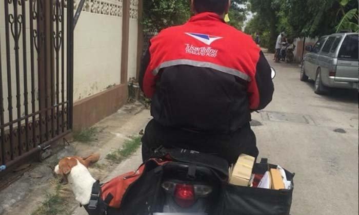 ทำชาวเน็ตประทับใจ บุรุษไปรษณีย์ช่วยส่งสุนัขโดนรถเหยียบกลับบ้าน
