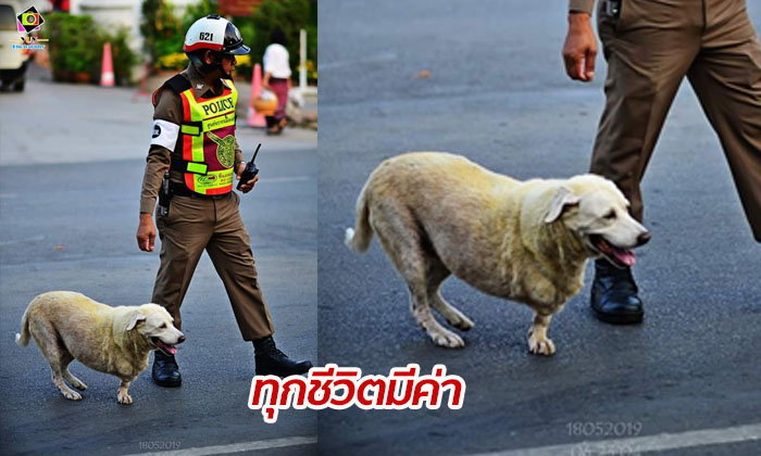"""""""สงสารสัตว์ร่วมโลก"""" เปิดใจนายตำรวจ หลังโซเชียลชื่นชม พาหมา 3 ขาข้ามถนน"""