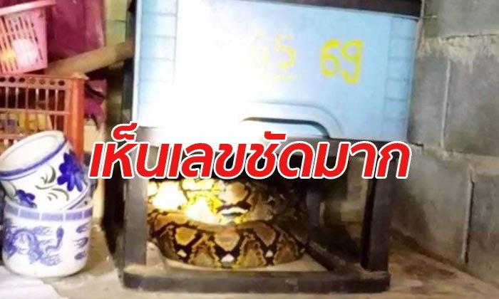 ฮือฮา! งูเหลือมนอนขดใต้ศาลเจ้าแม่ลักษมี ชาวบ้านเชื่อมาให้โชคลาภ