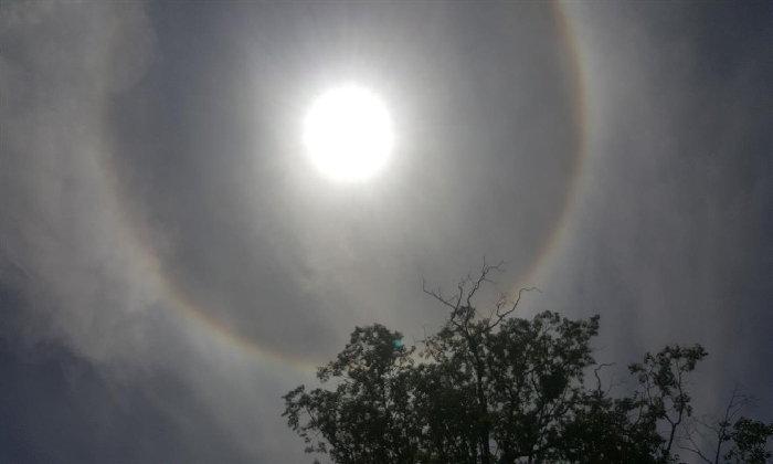 ชาวพิจิตรฮือฮา! พระอาทิตย์ทรงกรด ระหว่างตัดต้นตะเคียนอายุกว่า 300 ปี ที่โค่นล้ม