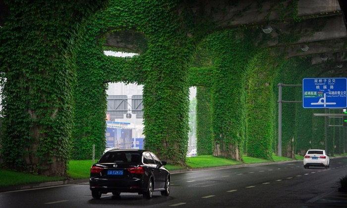 เมืองเฉิงตูผุดไอเดียเขียวชะอุ่ม ปลูกไม้เลื้อยบนทางด่วน ร่มรื่น-ลดมลพิษ