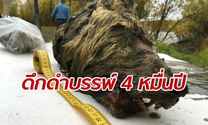 """ฮือฮา หัวหมาป่าโบราณโผล่จาก """"น้ำแข็งอาร์กติก"""" สมองยังคงสภาพดี"""