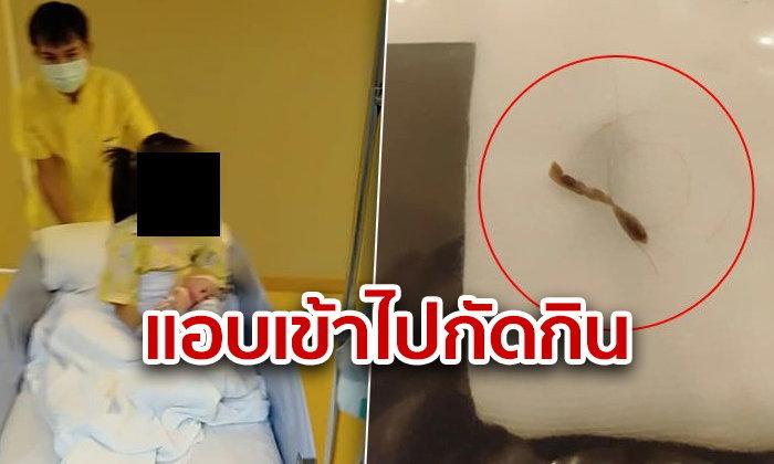 แมลงแอบเข้าช่องคลอดเด็กหญิง 5 ขวบ กัดกินจนเลือดไหล พ่อแม่ผวา รีบส่งโรงพยาบาล