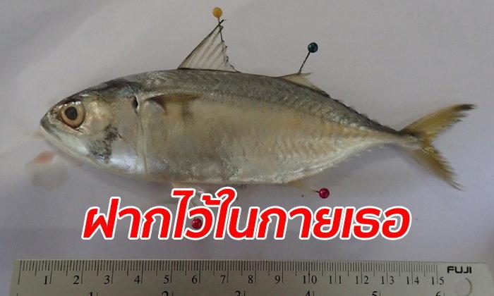 """ตะลึง! พบไมโครพลาสติกในท้อง """"ปลาทู"""" เฉลี่ย 78 ชิ้นต่อตัว ดร.ธรณ์ เตือนคนกินเสี่ยงโรค"""