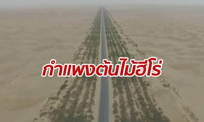 """""""กำแพงต้นไม้"""" ป้องกันถนนทะเลทรายแห่งแรกของเมืองจีน"""