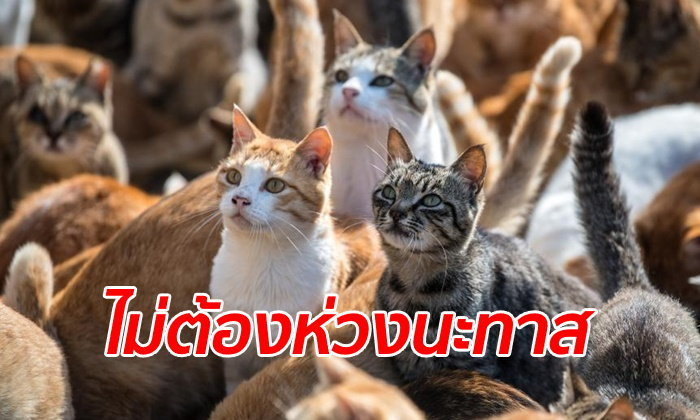 """ทาสแมวหายห่วง รัฐบาลสั่งดูแล """"เกาะแมว"""" ต้อนเหมียวหลบภัยพายุไต้ฝุ่นฮากิบิส"""