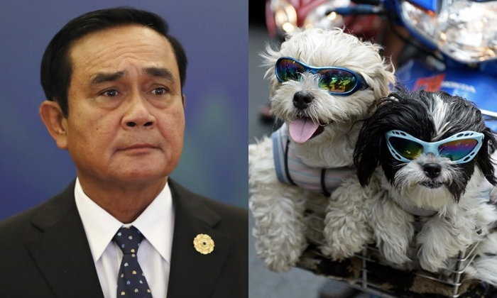 """""""ลุงตู่"""" สั่ง """"ทบทวน"""" ขึ้นทะเบียนหมาแมว แต่ไม่ถึงกับถอนร่างกฎหมาย"""