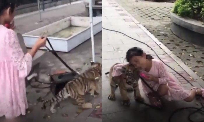 ไม่มีกลัว เด็กหญิง 9 ขวบ จูงลูกเสือเดินเล่นทุกเช้า