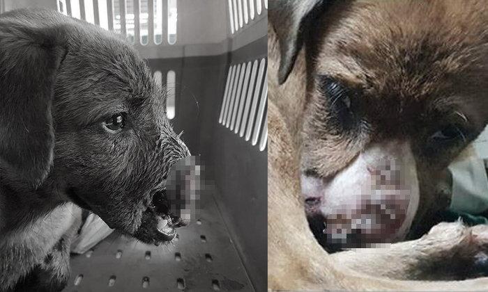 สะเทือนใจคนรักสัตว์  สุนัขจรจัดถูกคนใจบาป ใช้มีดฟันปากอาการสาหัส