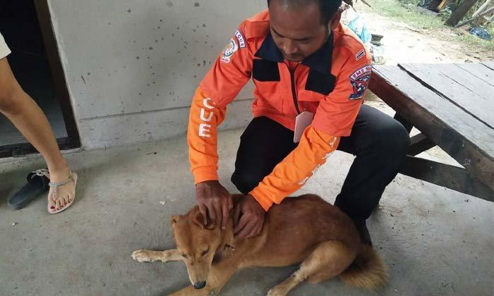 """เจ้าหน้าที่กู้ภัยเร่งช่วยชีวิตสุนัข หลังถูกคนใจร้ายใช้ """"ปืนลูกดอก"""" ยิงคอบาดเจ็บสาหัส"""