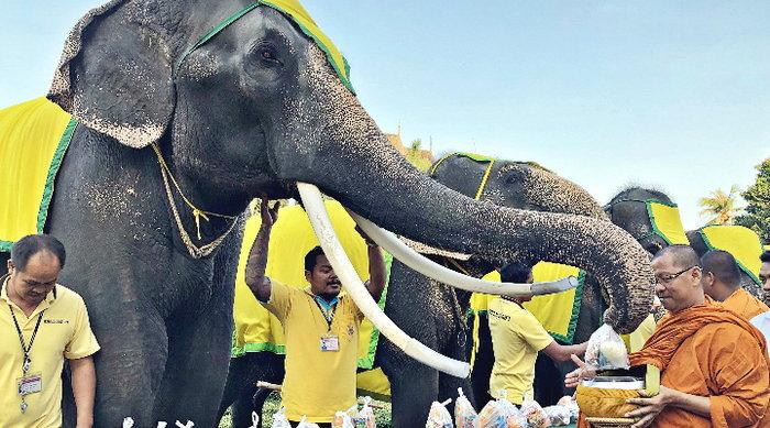 """สวนนงนุชนำ """"ช้างแสนรู้ใส่บาตรพระสงฆ์"""" ถวายเป็นพระราชกุศลแด่ในหลวง ร.9"""