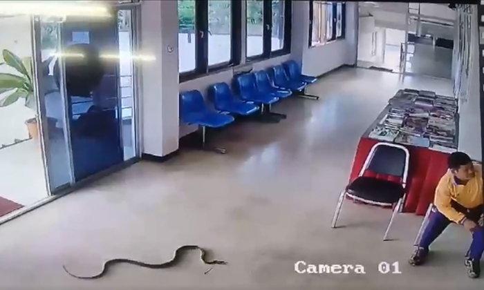 อึ้งอีกรอบ! ชายจับงูบนโรงพักขาพิการ แต่ตกใจจนลืมตัว ผู้เชี่ยวชาญยันงูไม่ก้าวร้าว