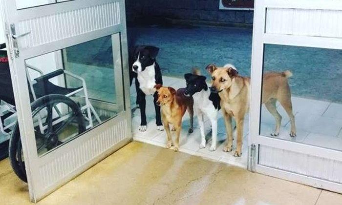 โลกประทับใจ หนุ่มจรจัดป่วยแต่ไม่โดดเดี่ยว แก๊งสุนัขนั่งเฝ้าหน้าโรงพยาบาล