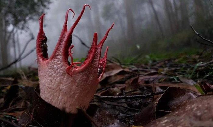 """สยองเบาๆ """"อุ้งมือปีศาจ"""" เชื้อราชวนขนหัวลุกที่พบในแดนมังกร"""