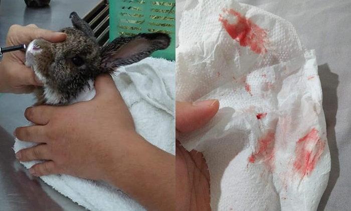 กระทบถึงสัตว์! กระต่ายน้อยป่วยเพราะฝุ่น PM 2.5 ฝั่งเจ้าของจามเป็นเลือด