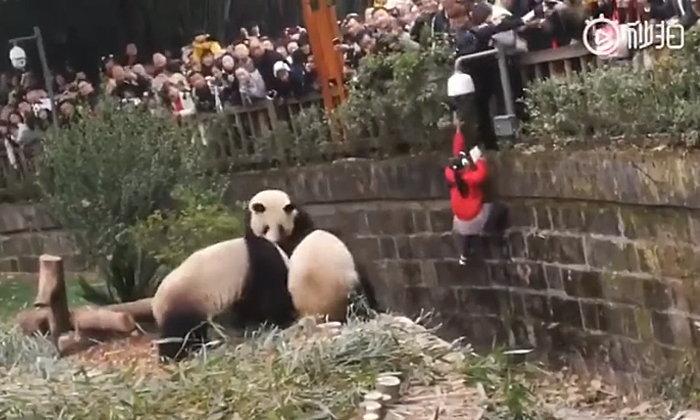 """กรี๊ดลั่นสวนสัตว์ หนูน้อยชาวจีนร่วงตกคอก """"แพนด้า"""" เหตุพ่อแม่อุ้มนั่งราวกั้น (คลิป)"""