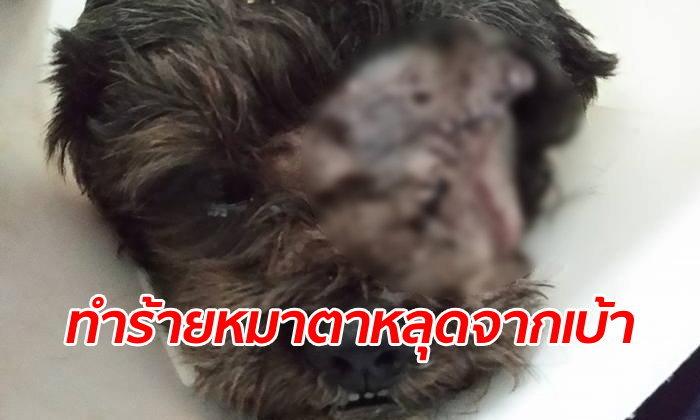 """เจ้าของสุดแค้น หมาพุดเดิ้ลถูกทำร้าย """"ตาหลุดจากเบ้า"""" เพื่อนบ้านไม่มีใครยอมรับผิด"""
