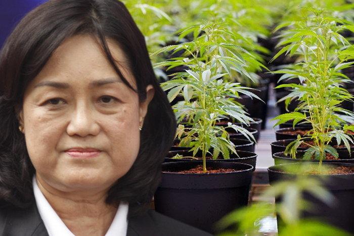 """แผนธุรกิจใหม่! การยาสูบแห่งประเทศไทย เล็งขาย """"กัญชา"""" แทนบุหรี่"""