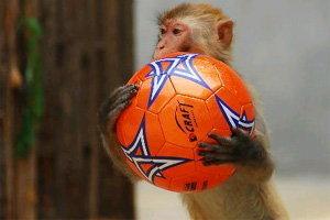 บอลโลกของเหล่าสัตว์หน้าขนสุดน่ารัก