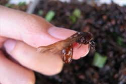 ตายปริศนา ! รปภ.หนุ่มเปิบแมลงทอด-อ้วกเป็นเลือด