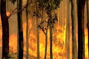ไฟไหม้ป่าพรุควนเคร็ง ยังไม่มอด