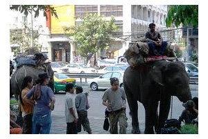 กทม.เผยไร้ช้างเร่ร่อนในเมืองกรุงแล้ว