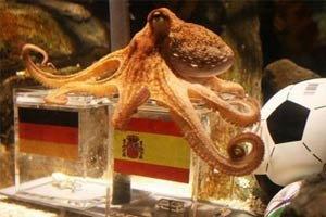 รัฐบาลสเปนห่วงความปลอดภัยปลาหมึกพอล