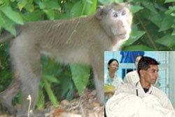 กรรม!! ลิงฉกทารก ตกหลังคาดับ ก่อนโดนจนท.ยิงทิ้ง