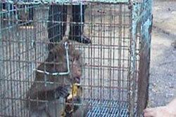 ชาวบ้านจับ ลิงแสม ถูกตัดแขนจากไฟช็อต รักษาแผลอักเสบ