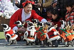 เจิด! เพนกวินแต่งกายในชุดซานตาคลอส