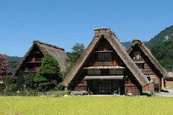 มรดกโลก! หมู่บ้านชาวนาของญี่ปุ่น