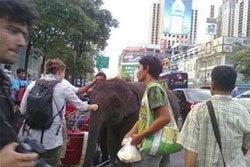 เดือด!ควาญช้างไทย สับตะขอใส่ฝรั่ง
