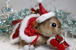กระต่ายแต่งตัวเป็นซานต้าต้อนรับปีใหม่