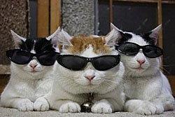 สุดฮา! แมวทำตัวทันสมัย