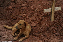 สุดเศร้า! หมาเฝ้าหลุมศพเจ้านาย เหยื่อโคลนถล่ม