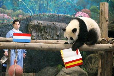 หลินปิงเอาด้วย!ทายสเปนแชมป์บอลโลก