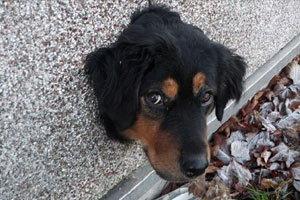 สุดทน! หมาน้อยหัวติดกำแพงพยายามหนีออกจากบ้าน หลังเจ้านายไม่ดูแล