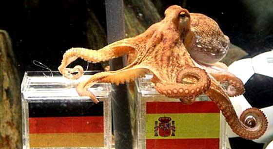 สื่อสเปนเผยหมึกพอลเตรียมย้ายไปมาดริด