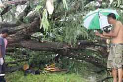 พายุพัดต้นมะขามยักษ์ล้มทับ ดช.11ขวบ ดับอนาถ