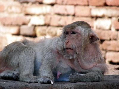 ฉีดวัคซีนโรคเรื้อน พิษสุนัขบ้าลิงลพบุรี