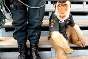 เศร้า! สันติสุข ลิงตร.แสนรู้ โดนสุนัขขย้ำดับแล้ว
